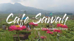 Cafe Sawah, Cafe sejuk tanpa AC Tempat Nongkrong Yang Asik